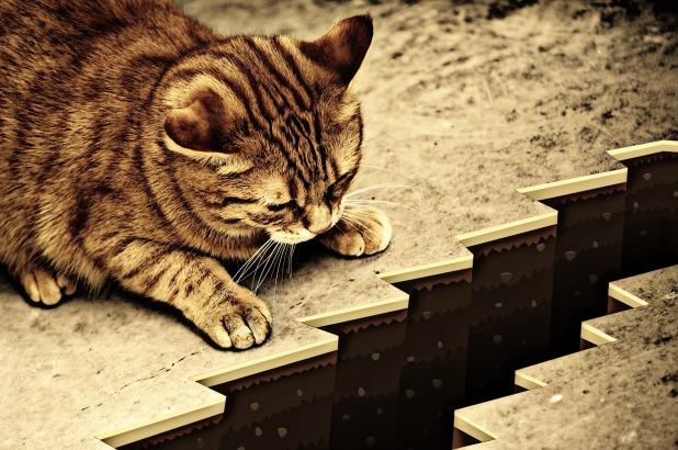 cat-1055602_1920