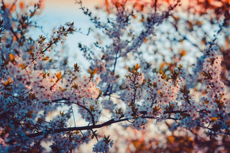 beautiful-bloom-blooming-785293