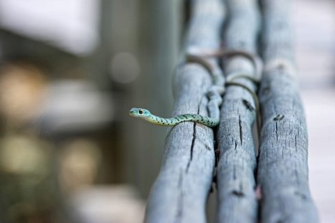 animal-branches-reptile-46500